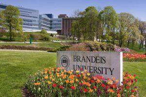 universidad de brandeis